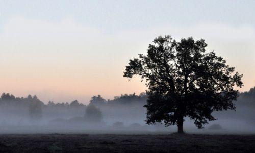 Zdjecie POLSKA / - / Lasy Janowskie / O świcie III