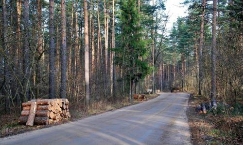 Zdjęcie POLSKA / Augustowszczyzna / Puszcza Augustowska / Przez puszcze