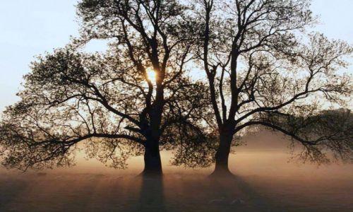 Zdjęcie POLSKA / mazury / pola ze szlakami / drzewa jozuego