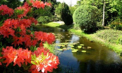 Zdjęcie POLSKA / zachodniopomorskie / Dobrzyca - Ogród Hortulus / trochę wiosny...