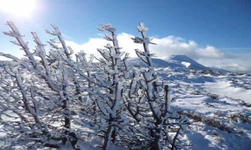 Zdjęcie POLSKA / Beskid / gdzieś na szlaku / Babia Góra
