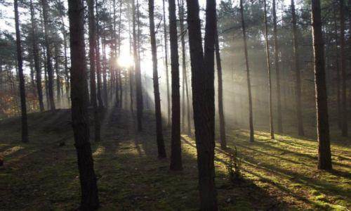 Zdjecie POLSKA / Kampinoski Park Narodowy / Kampinos / poranek w lesie