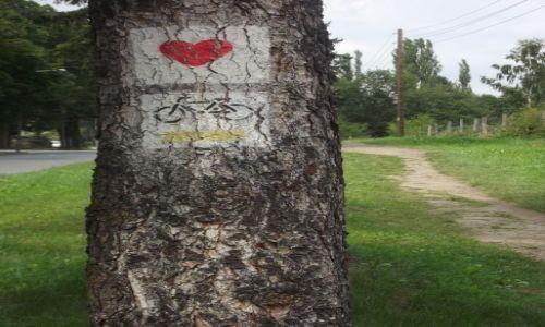 POLSKA / Ziemia Kłodzka / w drodze do Radkowa / Miłosny szlak