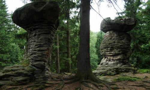 Zdjęcie POLSKA / Góry Stołowe / Gmina Szczytna / Skalne formy