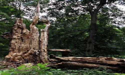 Zdjecie POLSKA / Woj Lubuskie / Park Mużakowski / Klimaty lasu