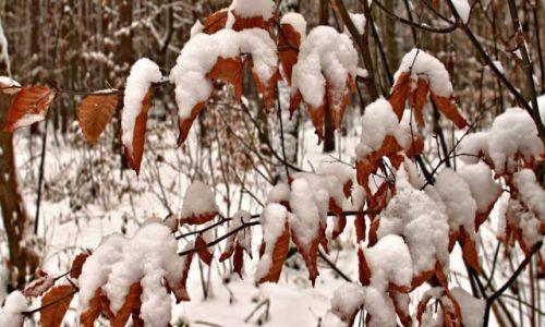 Zdjęcie POLSKA / Bory Tucholskie. / Masymilianowo / Nadal zimowo tej wiosny!