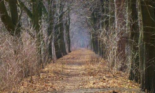 Zdjęcie POLSKA / alejka / Ciechocinek / Człowiek i jesień późną zimą