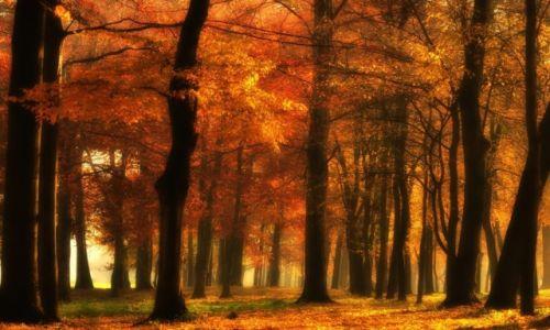 Zdjęcie POLSKA / Opolskie / Góra Świętej Anny / magiczny las