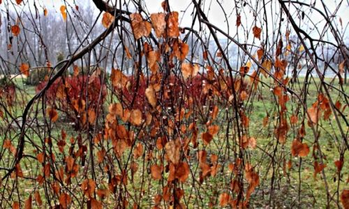 Zdjęcie POLSKA / Bory Tucholskie. / Gołąbek k. Tucholi. / Jesiennie... Deszczowo...