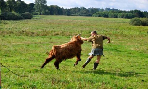 POLSKA / północny / Dwórzno / Patryk na spacerze ze szkockim bykiem