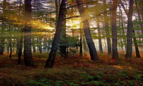 Zdjęcie POLSKA / Śląskie / Kobiór / w lesie