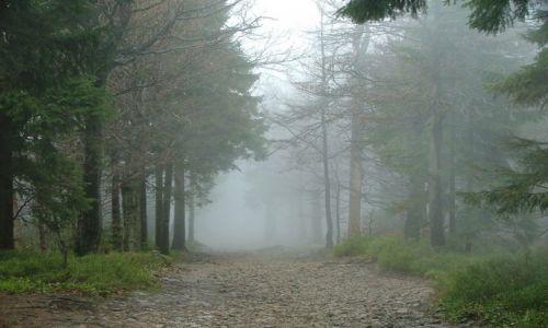 Zdjecie POLSKA / Beskid Śląski / Szczyrk / Majowa mgła w Beskidzie Śląskim