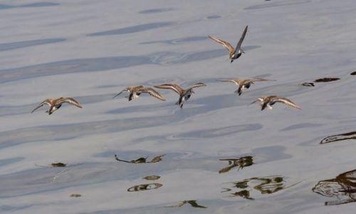 POLSKA / Pomorze / Jastarnia / Jastarnia, ptaki w porcie