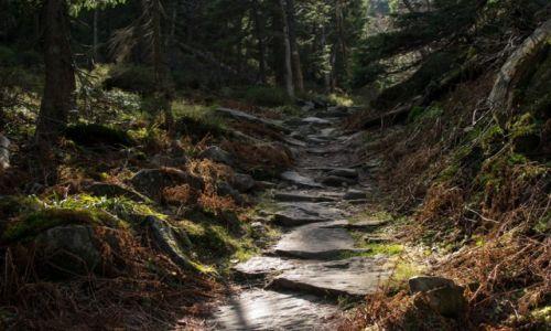 Zdjecie POLSKA / Babiogórski Park Narodowy / Babia Góra / Na szlaku