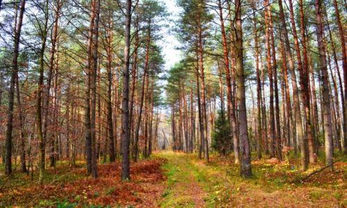 Zdjęcie POLSKA / Mazowieckie / Posiadały / Jesień w lesie