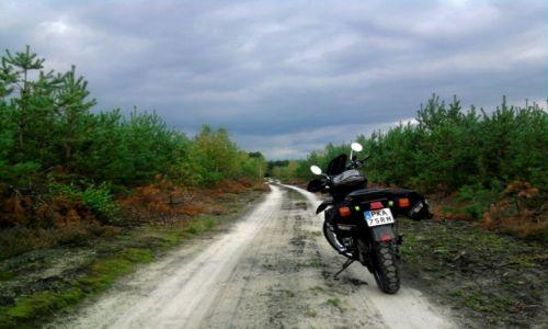 Zdjecie POLSKA / Wielkopolska / Orla góra / Las