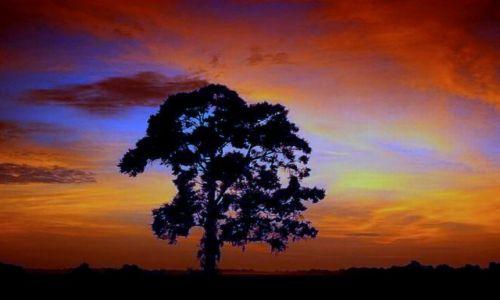 Zdjęcie POLSKA / Slask / Beskid Zywiecki / Samotne drzewo