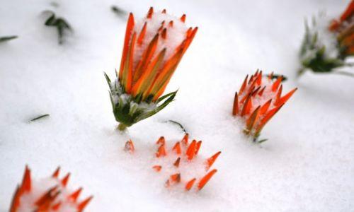Zdjęcie POLSKA / Mazowieckie / ... / Zima zaskoczyła nie tylko drogowców....