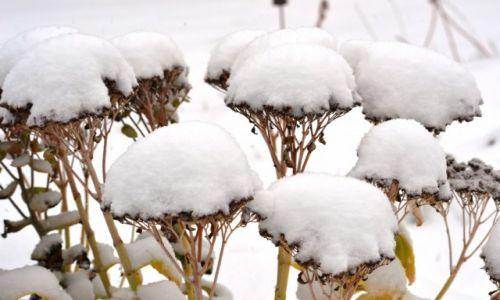 Zdjecie POLSKA / Mazowieckie / ... / Zima potrafi też być urokliwa
