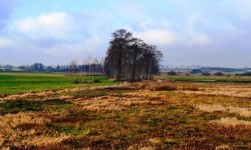 Zdjęcie POLSKA / Mazowieckie / Latowicz / Mazowieckie krajobrazy