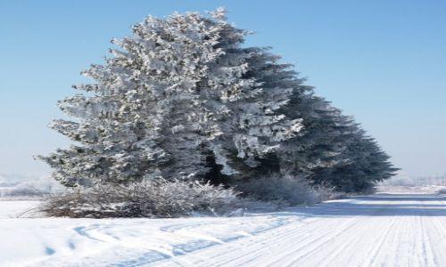 Zdjecie POLSKA / Mazowieckie / Mienia / Zima potrafi też być urokliwa