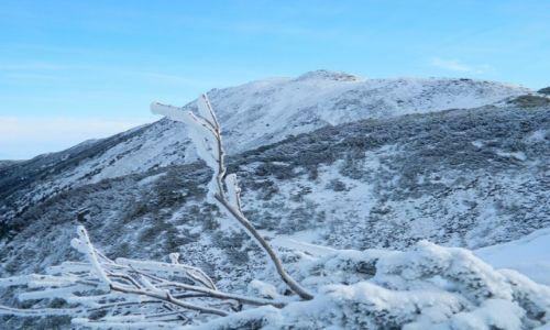 Zdjęcie POLSKA / Beskid / widok na Babią z przełęczy Brona / BABIA Góra 2014