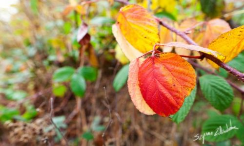 Zdjęcie POLSKA / Rudawy Janowickie / - / Barwy jesieni
