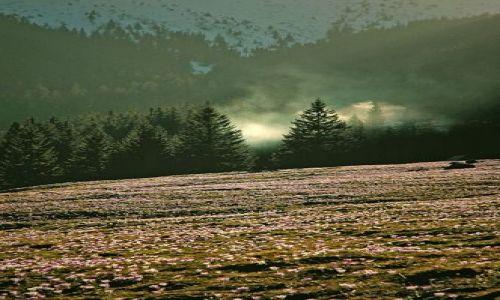 Zdjecie POLSKA / Tatry / Dolina Chocholowska / płoną góry ,płona lasy