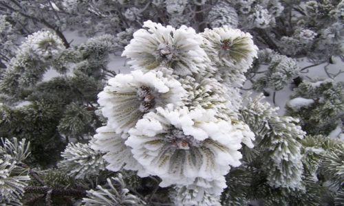 Zdjęcie POLSKA / Babiogórski Park Nardowy / w drodze na Babią  / W zimowej odsłonie IV