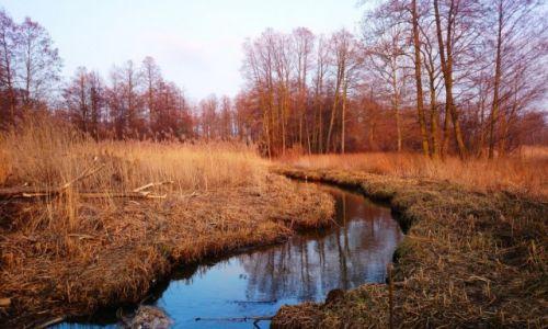 Zdjecie POLSKA / Mazowieckie / Wiciejów / Mazowieckie krajobrazy