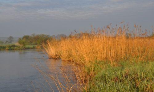 POLSKA / rzeka Wieprz / okolice Krasnystawu / Nad brzegiem