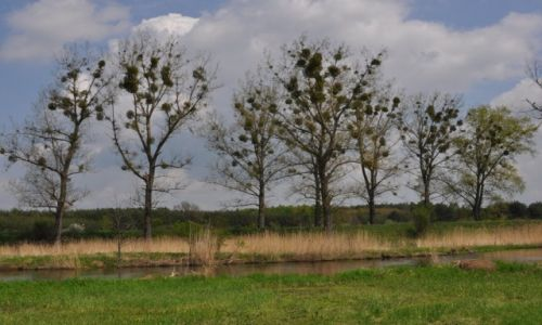 Zdjęcie POLSKA / rzeka Wieprz / okolice Trawnik / Jemioły