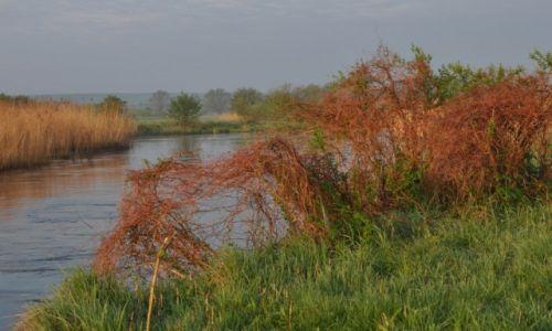 Zdjecie POLSKA / rzeka Wieprz / okolice Trawnik / Gorejący krzew
