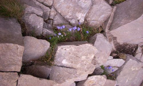 Zdjecie POLSKA / Tatry / Tatrzański Park Narodowy / Roślinność górska
