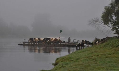 Zdjęcie POLSKA / rzeka Narew / gdzieś przed Ostrołęką / Poranny prom