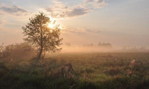 Zdjęcie POLSKA / Mazowsze / między Jeziorzanami a Sobieszynem / O poranku