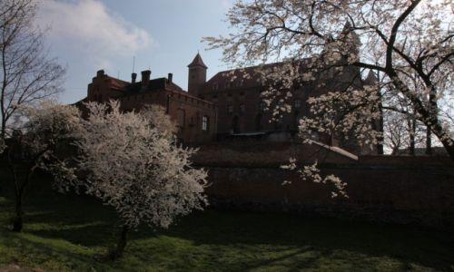 Zdjęcie POLSKA / Pomorze / Gniew / Wiosna na zamku w Gniewie
