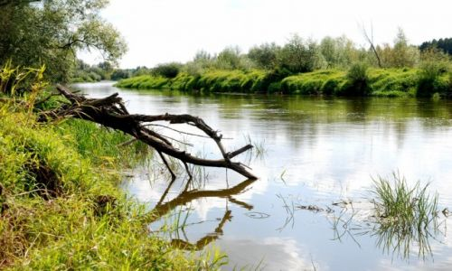 Zdjecie POLSKA / rzeka Bug / gdzieś za Mielnikiem / Nad Bugiem