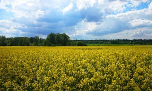 Zdjęcie POLSKA / Mazowieckie / Mienia / Na żółto