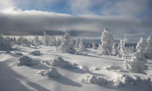 Zdjecie POLSKA / Karkonosze / koło śnieżki / zima