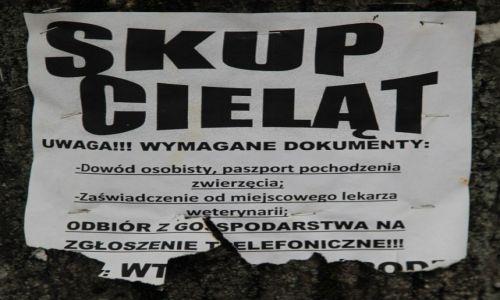 Zdjecie POLSKA / Beskid niski / Dukla / Ogłoszenie