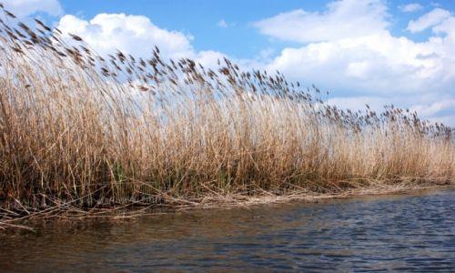 Zdjęcie POLSKA / mazowieckie / rzeka Radomka / Wczesna wiosna