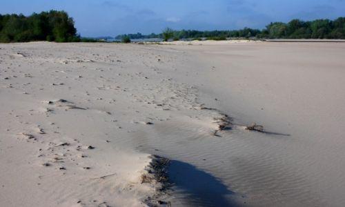 Zdjęcie POLSKA / mazowieckie / wyspa na Wiśle (za Kozienicami) / Krajobraz wyspy