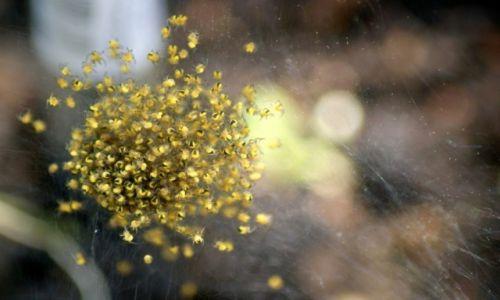 Zdjęcie POLSKA / wielkopolska / łąka / Spiders