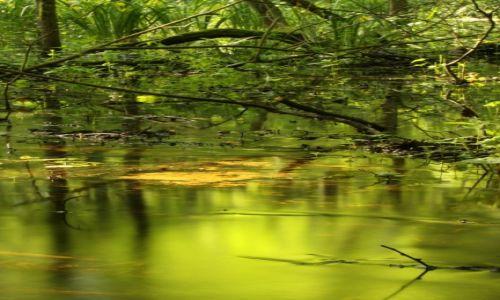 Zdjęcie POLSKA / mazowieckie / Kampinos / Polska dżungla