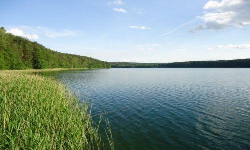 Zdjecie POLSKA / Województwo kujawsko-pomorskie / Zbiczno / Jezioro Zbiczno (2)