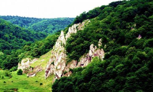 Zdjecie POLSKA / Małopolska / Ojcowski Park Narodowy / Zielonym szlaki