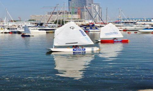 Zdjecie POLSKA / Pomorze / Gdynia / Gdynia, młode wilki morskie