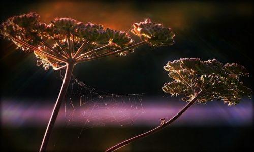 Zdjecie POLSKA / ........ / ......... / M-1 dla pająka