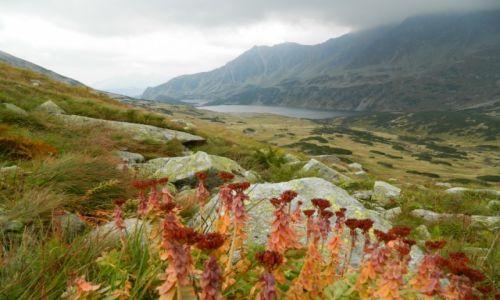 Zdjęcie POLSKA / Tatry / gdzieś na szlaku / widok na dolinę 5 stawów